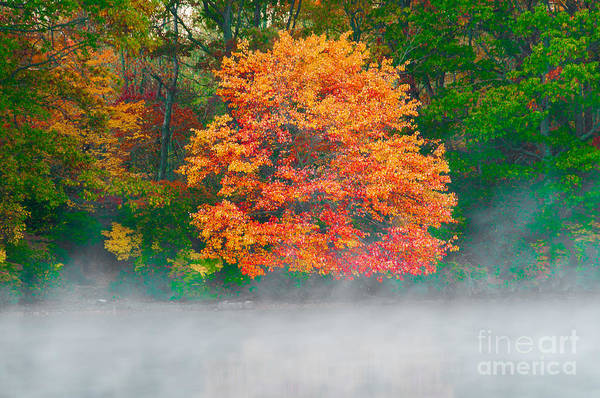 Photograph - Misty Fall Tree by Anthony Sacco