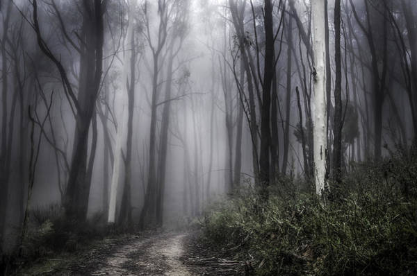 Wall Art - Photograph - Misty Forrest by Jessy Willemse
