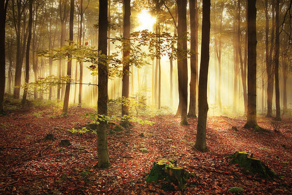Environmental Conservation Photograph - Misty Forest During Autumn by Konradlew