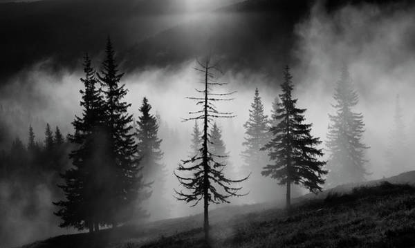 Ancient Photograph - Misty Forest by Julien Oncete