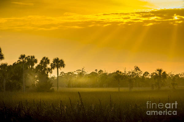 Marshland Photograph - Misty Glade by Marvin Spates