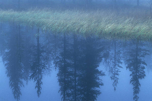 Boreal Forest Photograph - Misty Lake, Sweden by Peter Essick