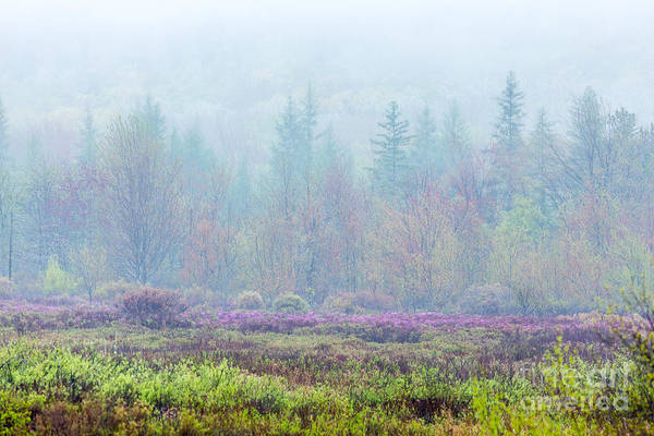 Photograph - Misty Meadow In Acadia by Susan Cole Kelly