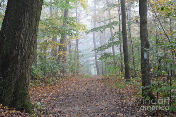 Wall Art - Photograph - Misty Morn At Nelson Ledges by Lila Fisher-Wenzel
