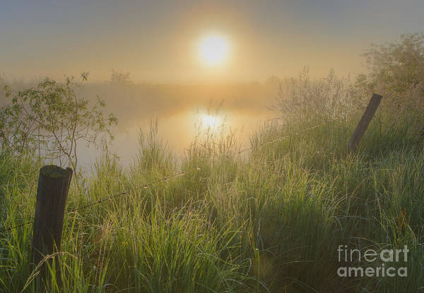 Photograph - Misty Morning At The Local Pond by Dan Jurak