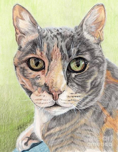 Puss Drawing - Misty Morning by Audrey Van Tassell