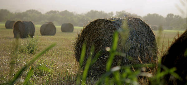 Photograph - Misty Morning Bales Of Hay by Sarah Broadmeadow-Thomas