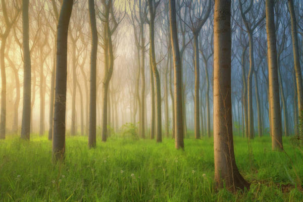 Tree Trunk Photograph - Misty Morning by Jingshu Zhu