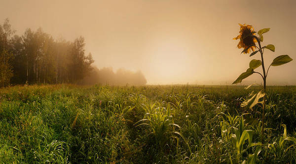 Green Grass Photograph - Misty Morning by Julia Shepeleva
