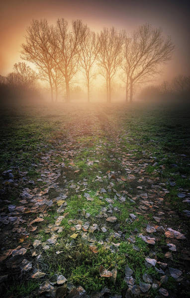 Misty Wall Art - Photograph - Misty Morning by Luca Rebustini