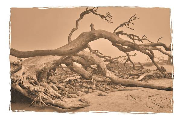 Photograph - Misty Morning On Jekyll Island by Gordon Elwell