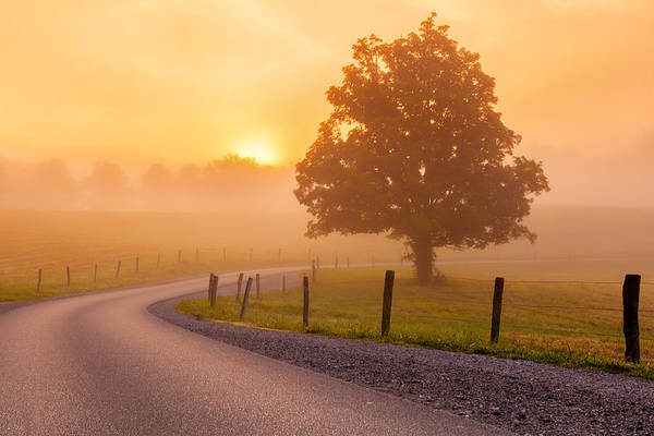Photograph - Misty Morning Sunrise by Keith Allen