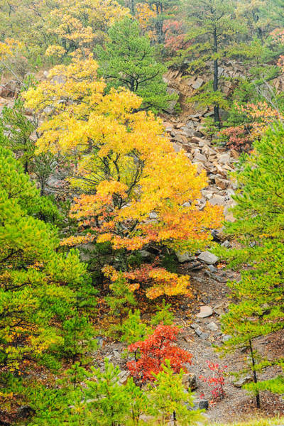 Scenic Byway Photograph - Misty Mountain Tree - Talimena Scenic Byway - Arkansas To Oklahoma by Silvio Ligutti