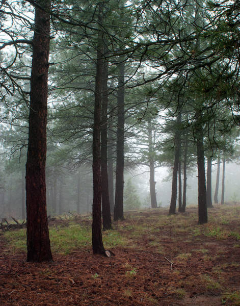 Woodlot Photograph - Misty Pines In Colorado by Julie Magers Soulen