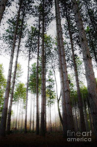 Photograph - Misty Pines by Michael Arend