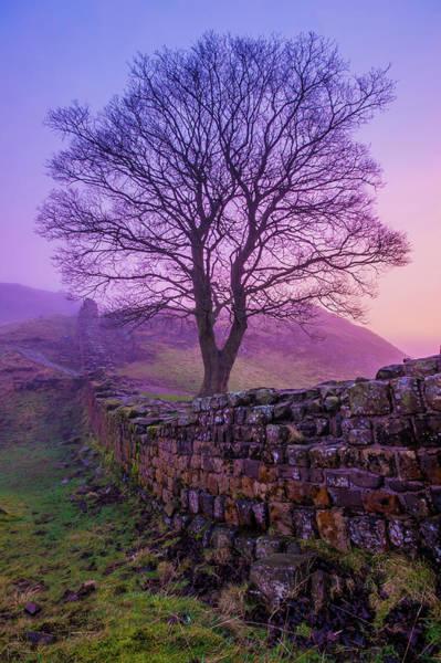 Hadrians Wall Photograph - Misty Pink Dawn, Sycamore Gap by Richard Goddard
