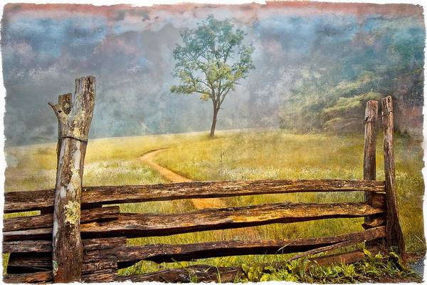 Photograph - Misty Tree by Debra and Dave Vanderlaan