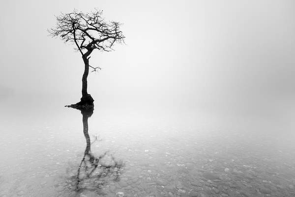 Photograph - Misty Tree by Grant Glendinning