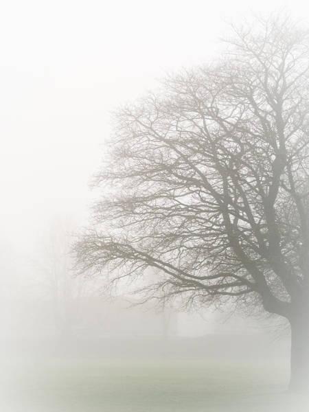 Hakon Photograph - Misty Tree by Hakon Soreide