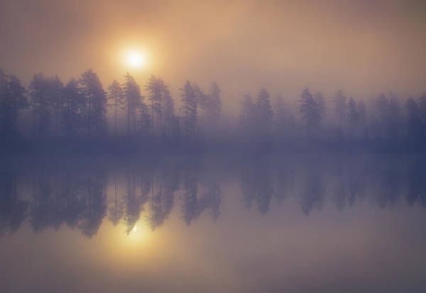 Misty Wall Art - Photograph - Misty Trees by Andreas Christensen