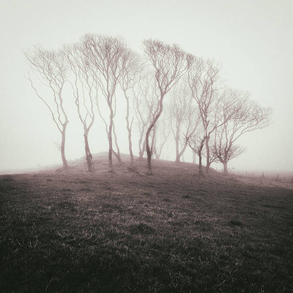 Wall Art - Photograph - Misty Trees by Dave Bowman