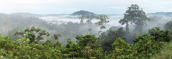 Ecuador Wall Art - Photograph - Misty Tropical Rainforest by Dr Morley Read