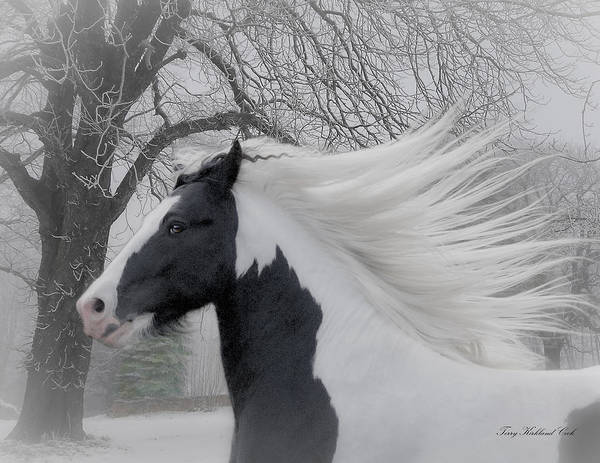 Wall Art - Digital Art - Misty Winter by Terry Kirkland Cook