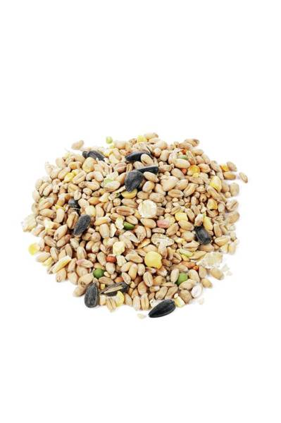 Sunflower Seeds Photograph - Mixed Bird Seeds by Geoff Kidd/science Photo Library