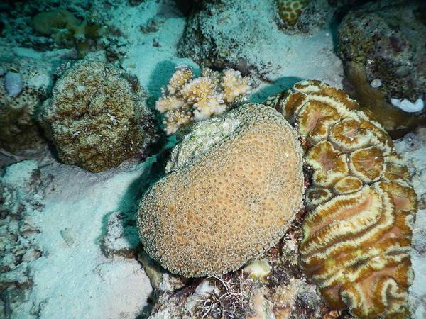 Wall Art - Photograph - Mixed Corals by Carleton Ray
