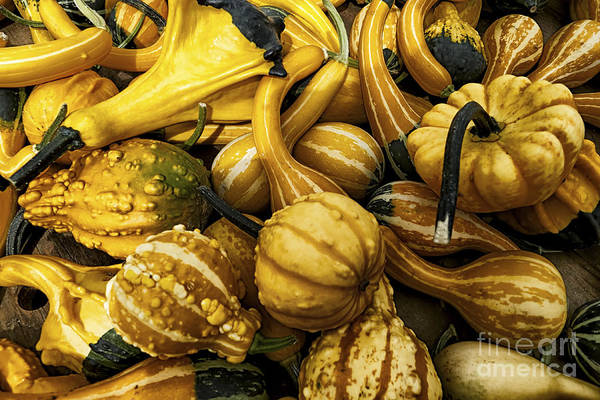 Photograph - Mixed Gourds by Mark Miller