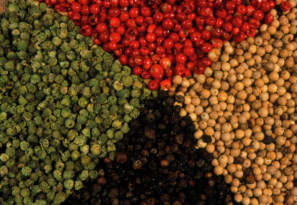 Foodstuff Photograph - Mixed Peppercorns by Th Foto-werbung/science Photo Library