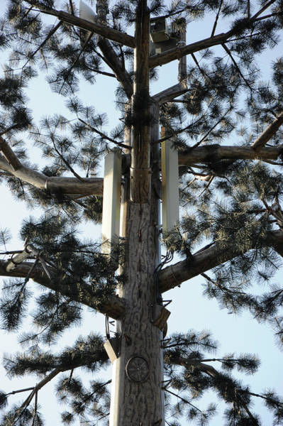 Mast Photograph - Mobile Phone Mast Disguised As Tree by Public Health England