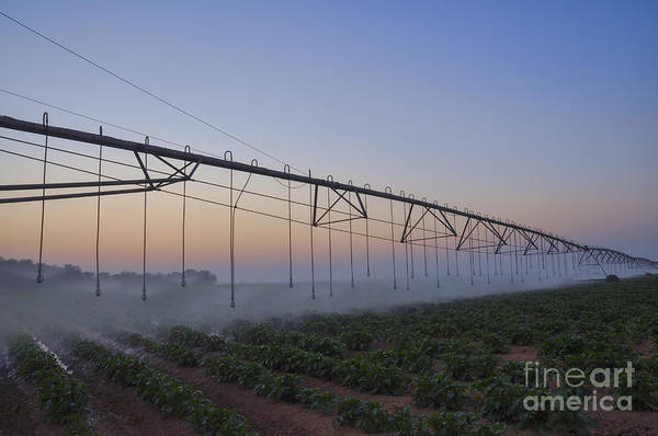 Kibbutz Photograph - Mobile Watering System At Sunrise  by Efi Bar
