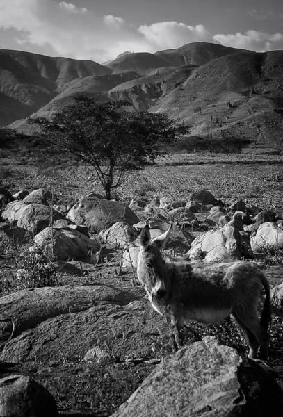 Photograph - Moche Valley Donkey by Ben Shields