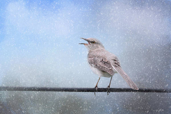 Photograph - Mockingbird In The Snow by Jai Johnson