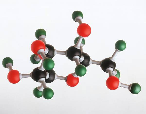 Atoms Wall Art - Photograph - Model Of A Glucose Molecule by Dorling Kindersley/uig
