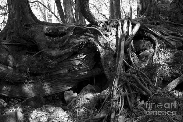 Photograph - Modeling Of Natural -1 by Tad Kanazaki