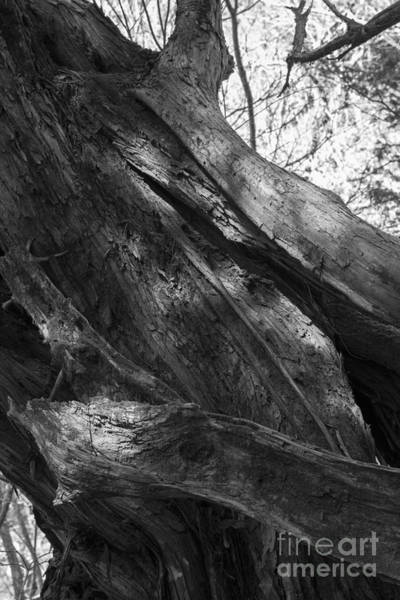 Photograph - Modeling Of Natural -2 by Tad Kanazaki