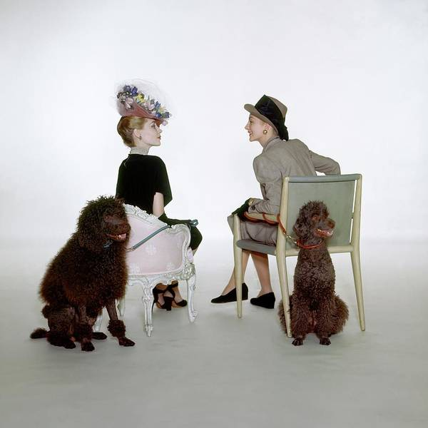 Pet Photograph - Models Sitting With Poodles by John Rawlings