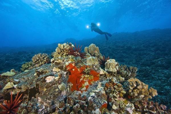 Wall Art - Photograph - Molokini Crater Maui Hawaii Usa A by Stuart Westmorland