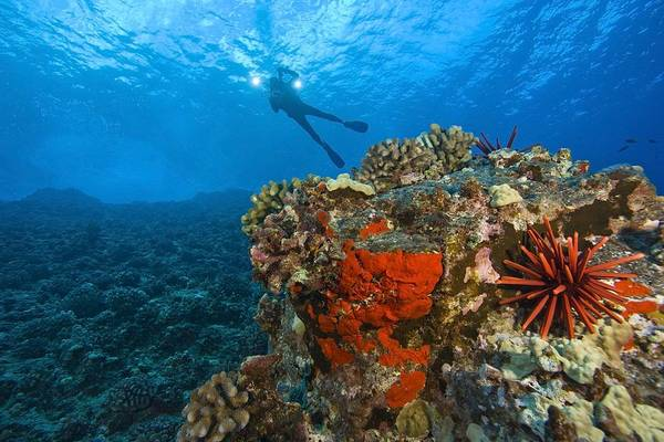 Free Dive Wall Art - Photograph - Molokini Crater, South Maui, Hawaii by Stuart Westmorland