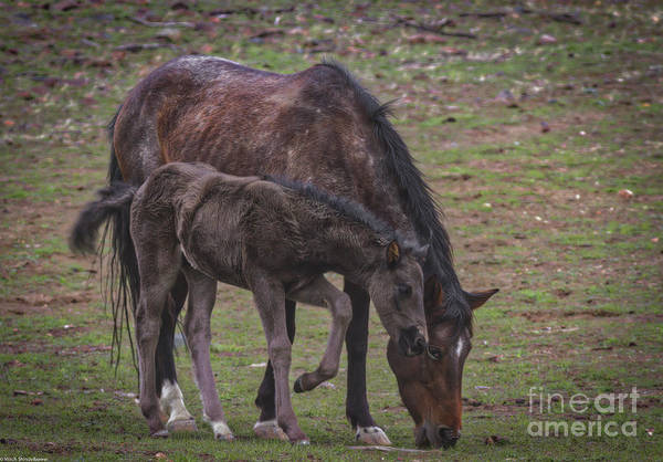 Green And Gray Photograph - Mom Mustang And Colt by Mitch Shindelbower