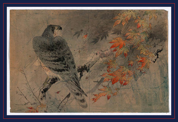 Maple Drawing - Momiji Ni Washi by Japanese School