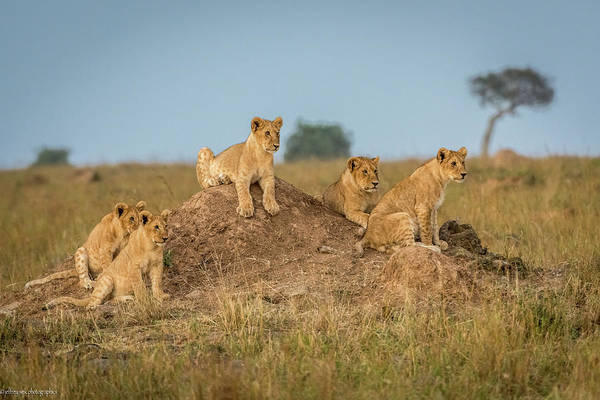 Kenya Wall Art - Photograph - Mom's Coming Back - Dinner Is Almost Here. by Jeffrey C. Sink