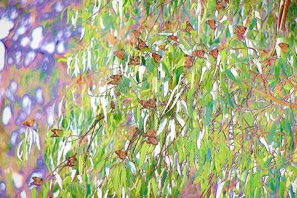 Digital Art - Monarch Butterflies On Eucalyptus Branches by Priya Ghose