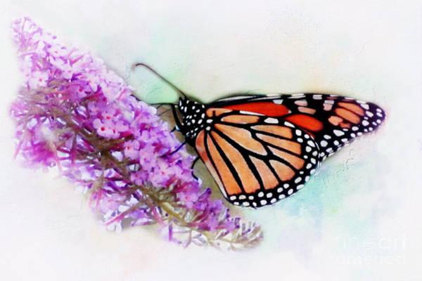 Butterfly On Flower Digital Art - Monarch Butterfly by Irina Hays