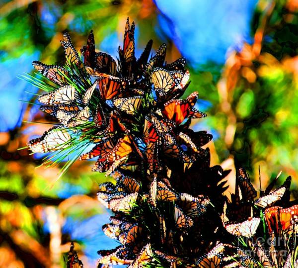 Photograph - Monarch Butterfly Migration by Tap On Photo