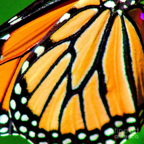 Photograph - Monarch Butterfly Wing Square by Karen Adams