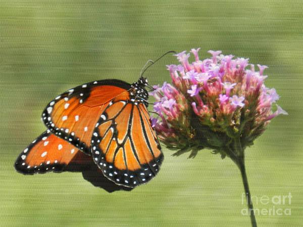 Photograph - Monarch Flutterby by Grace Dillon