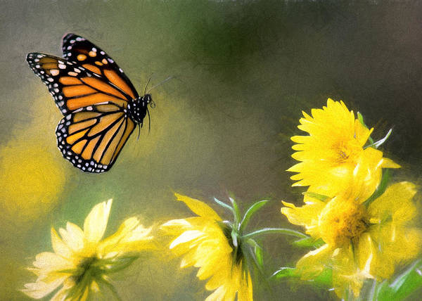 Photograph - Monarch Yellow Pencil by Rospotte Photography